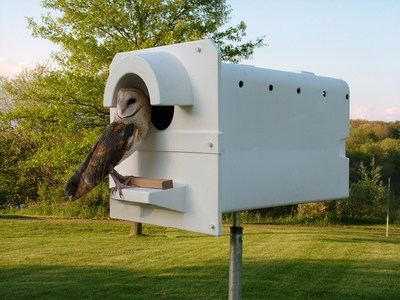 The plastic Barn Owl Box is lightweight and long lasting