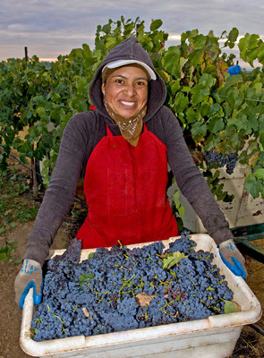 2013 will be a vintage year for California wines with its harvest of exceptional quality winegrapes. (PRNewsFoto/Wine Institute) (PRNewsFoto/WINE INSTITUTE)