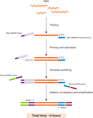 DNA SMART Technology: Overview of template-switching technology that forms the core of the DNA SMART ChIP-Seq Kit. This kit adapts Clontech's patented SMART technology in an innovative manner for use with low-input samples, including both dsDNA and ssDNA templates, to generate ChIP-seq libraries for NGS. (PRNewsFoto/Clontech Laboratories, Inc.)