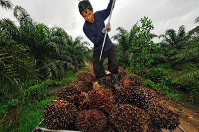Mondelez International's sustainable palm oil action plan is the latest step in its long-term commitment to only buy palm oil that's produced on legally held land; doesn't lead to deforestation or loss of peat land; respects human rights, including land rights; and doesn't use forced or child labor. (photo: think4photop)