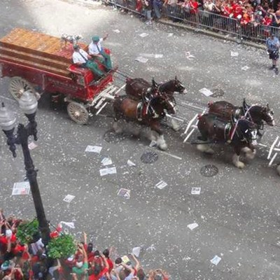 World-Famous Budweiser Clydesdales Join the Chicago Cubs Victory Parade