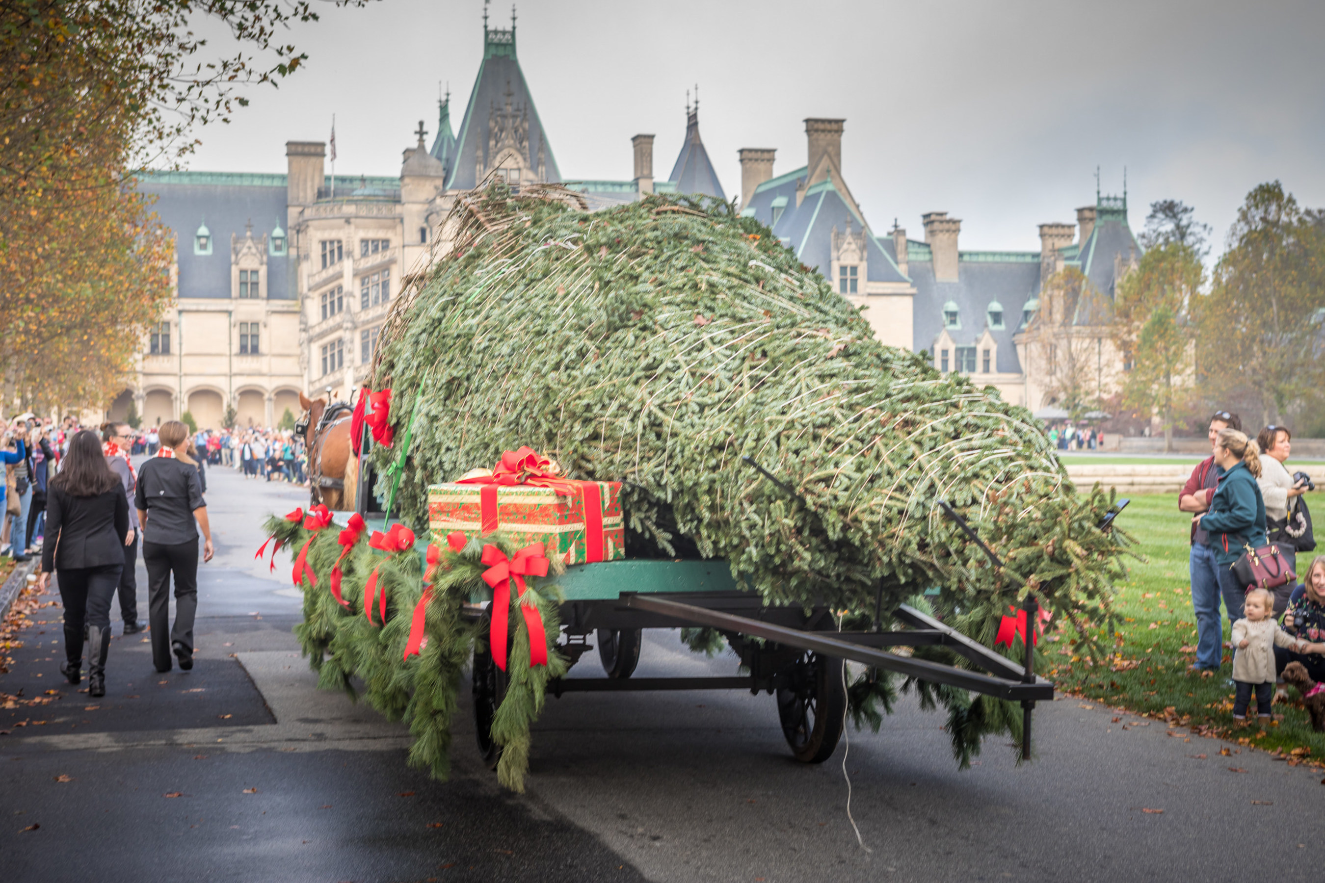 Biltmore Christmas.The Delivery Of A Towering Tree Announces The Arrival Of