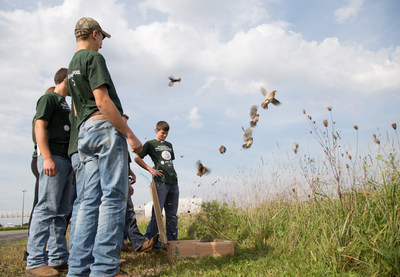 A group of Dundee High School freshmen release a box of northern bobwhite quail they raised as part of a four-year project to repopulate southern Michigan with quail at FCA US Dundee Engine Plant on Oct. 5, 2016. More than 400 quail now call the 132 acres of native Michigan prairie grass in Dundee, Mich. home.