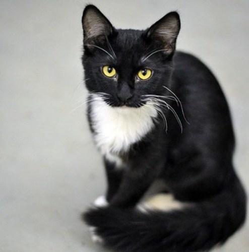 Muggins' Owner Called Him Dead Cat Walking (PRNewsFoto/Holistic Vet)