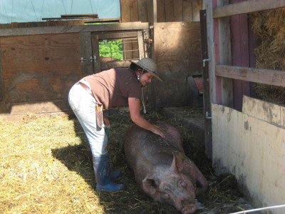 Kingbird Farm, located 15 miles southeast of Ithaca, New York, received a Fund-a-Farmer grant in 2012 for a project to improve outdoor access for their sows during farrowing.  (PRNewsFoto/Food Animal Concerns Trust)