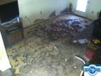 Mold Concerns in the Basement (PRNewsFoto/SI Restoration)