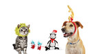 Petco launches Dr. Seuss Pet Fans Collection in time for Holiday season. The new collection features an assortment of fantastical dog and cat products inspired by some of Dr. Seuss's most popular children's books. Available now only at petco.com/DrSeuss and at Petco and Unleashed by Petco stores nationwide.