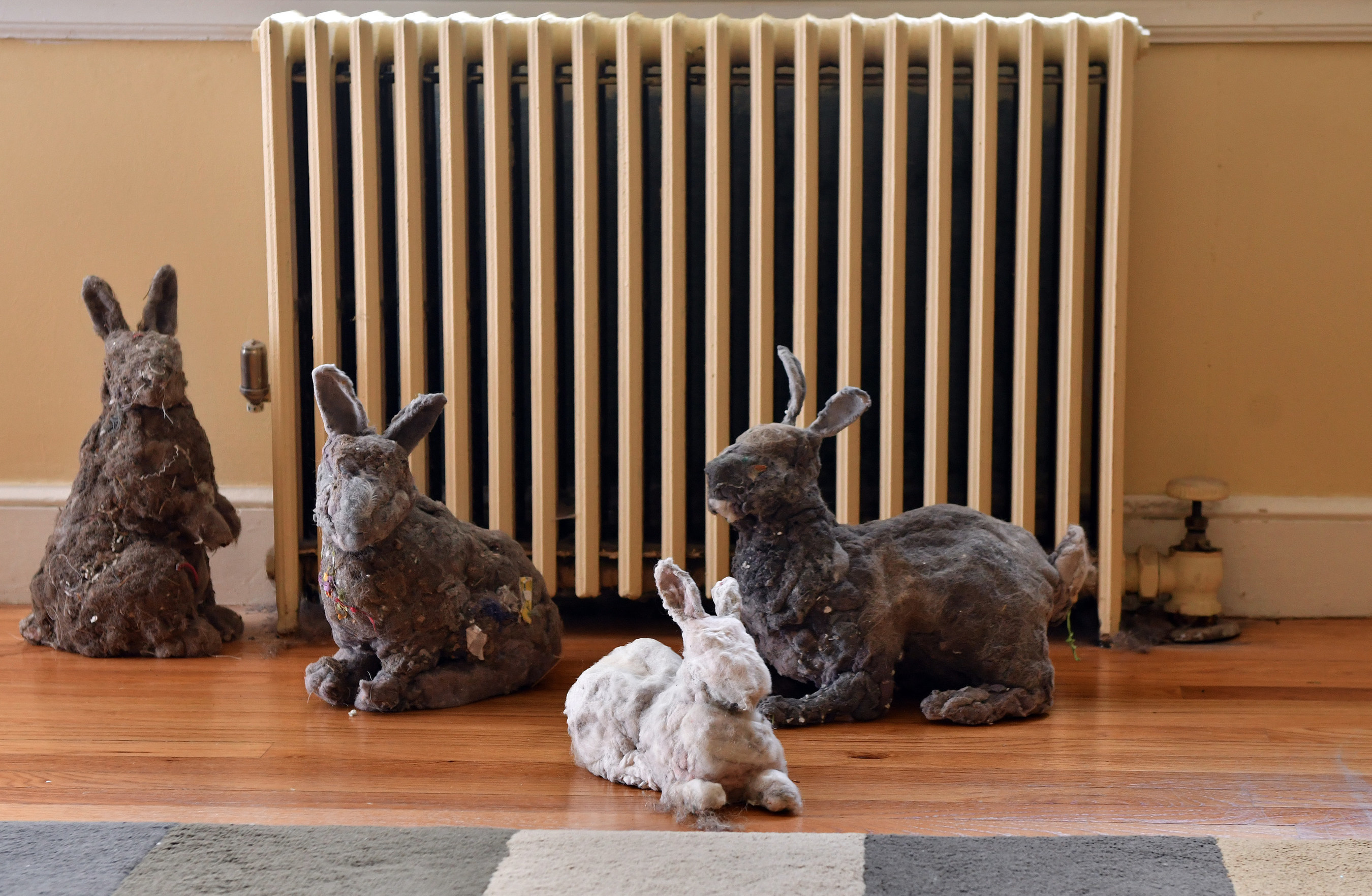 Bunny sculptures by artist Suzanne Proulx, fabricated from household dust, sit together in a living room, Friday, August 26, 2016 in Lexington, Mass. The sculptures, commissioned by Febreze(r) Air Purifiers, were made to represent what 40 pounds of dust, the average amount a U.S. home will collect in a year, could look like. (Josh Reynolds/AP Images for Febreze(r) Air Purifiers)