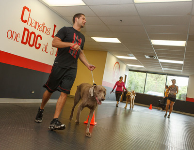 Bow Wow Bootcamp. (PRNewsFoto/K9 Fit Club)