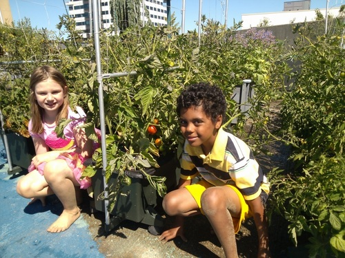 The thriving rooftop garden at Trinity Lutheran College in Everett, Washington hosts a wide variety of classes ...