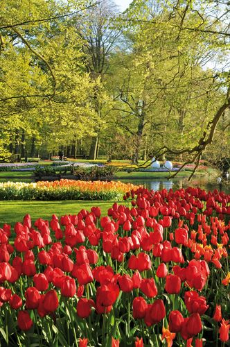 "World Renowned Keukenhof Gardens in Holland will open March 21. The Keukenhof theme for 2013 is ""United Kingdom – Land of Great Gardens"". Keukenhof will be focusing on the United Kingdom in a colourful way, the country being an important partner both in terms of flower bulb export as well as tourism. The country also offers an enormous variety of different gardens and landscapes. What's more, Keukenhof itself was originally designed as an English landscape garden. The most beautiful spring garden in the world opens its gates. (PRNewsFoto/KEUKENHOF)"