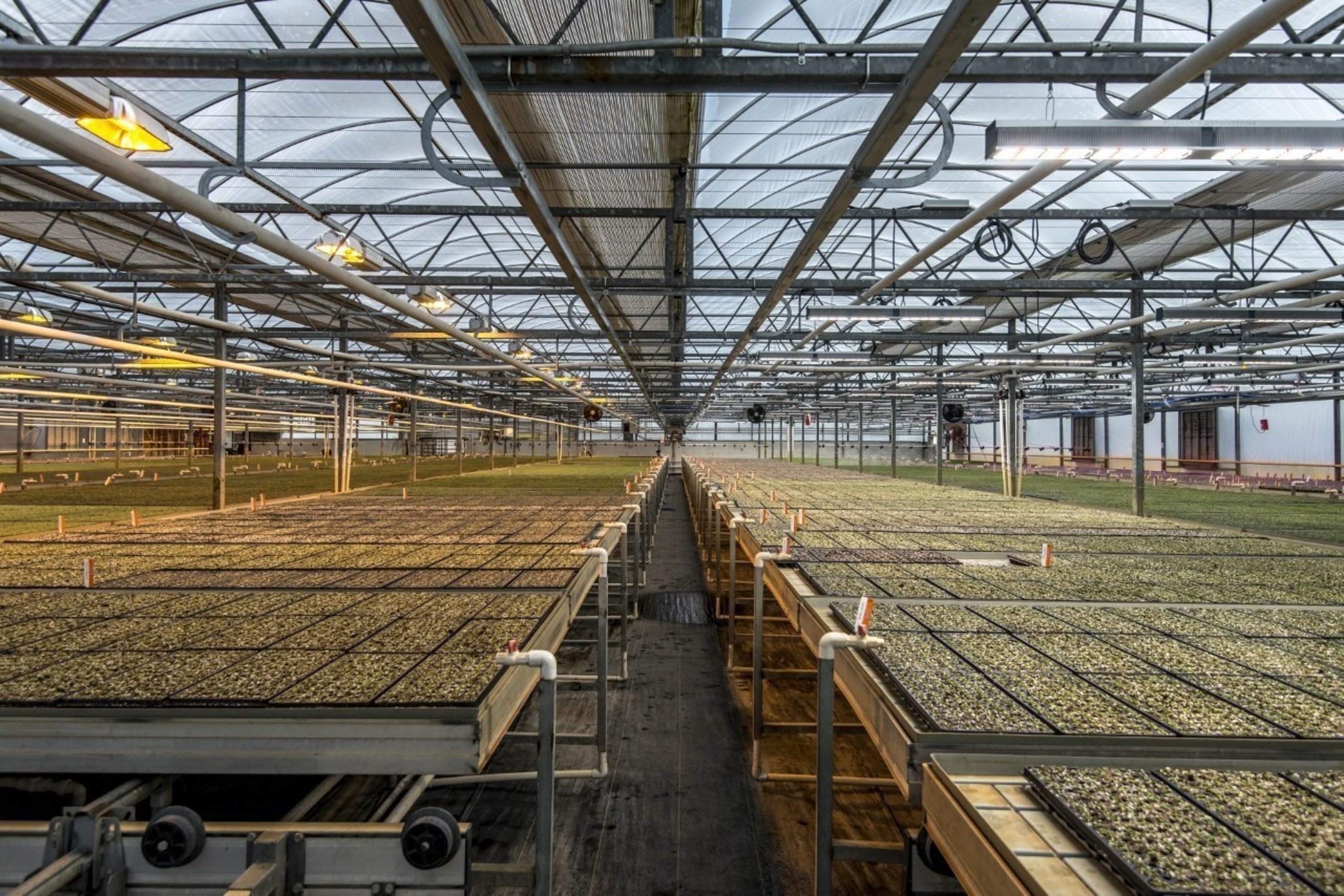 Organic herb producer, Shenandoah Growers upgrades from HPS to Fluence VYPRx PLUS.