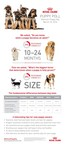 Puppy Poll Shows Two In Three Americans Uncertain When Puppies Reach Adulthood