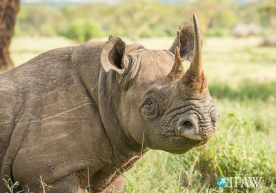IFAW: Wildlife species at stake at CITES conference in South Africa