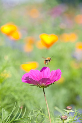 With hundreds of studies conducted and a history of safe use on farms, lawns and landscapes across the world, we know more about neonics and honey bees than any other pesticide group.