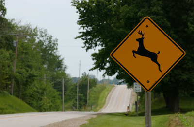 New State Farm(R) data shows odds drivers will collide with a deer are rising.  (PRNewsFoto/State Farm)