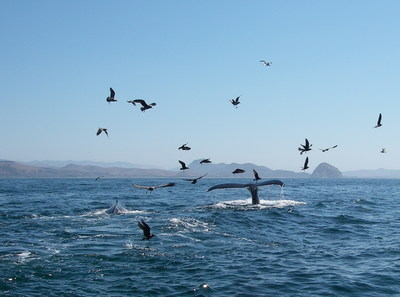 Subsea tours is offering FREE whale watching tours for kids, up to 3 per family through the end of December.