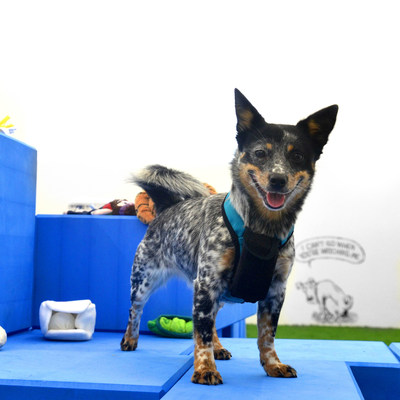 Lua Ready to Shop at Bark & Co's BarkShop Live where dogs shop for their own toys