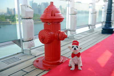 Ella Bean, a Yorkie mix, enjoys the remastered kennels on the Queen Mary 2, the only passenger liner to carry pets, Wednesday, July 6, 2016, at Brooklyn Cruise Terminal in New York, its U.S. homeport. (Diane Bondareff/AP Images for Cunard)