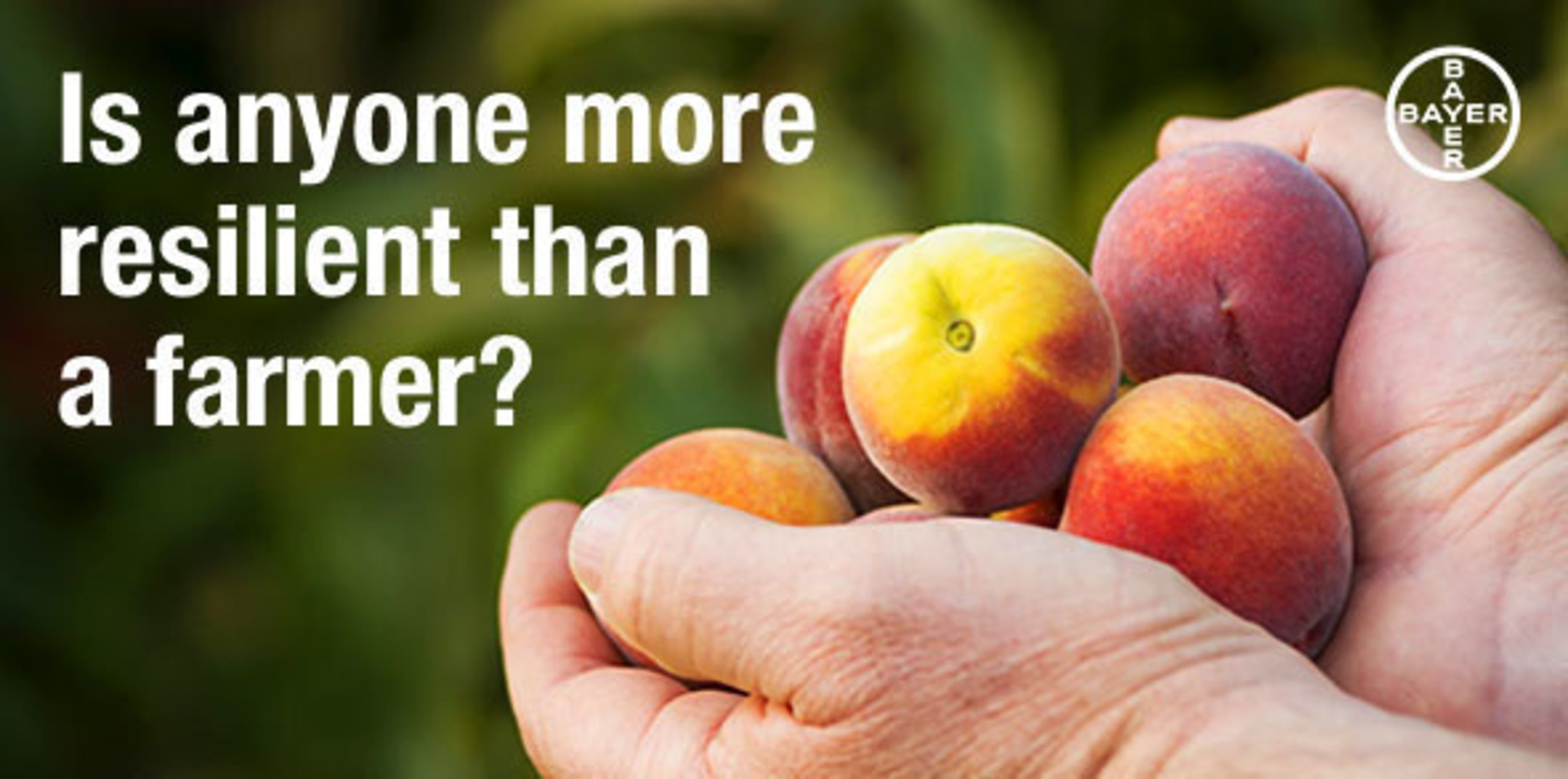Is anyone more resilient than a farmer? Amy Machamer of Hurd Orchards in western New York continues to battle the weather to save her stone fruit crops.