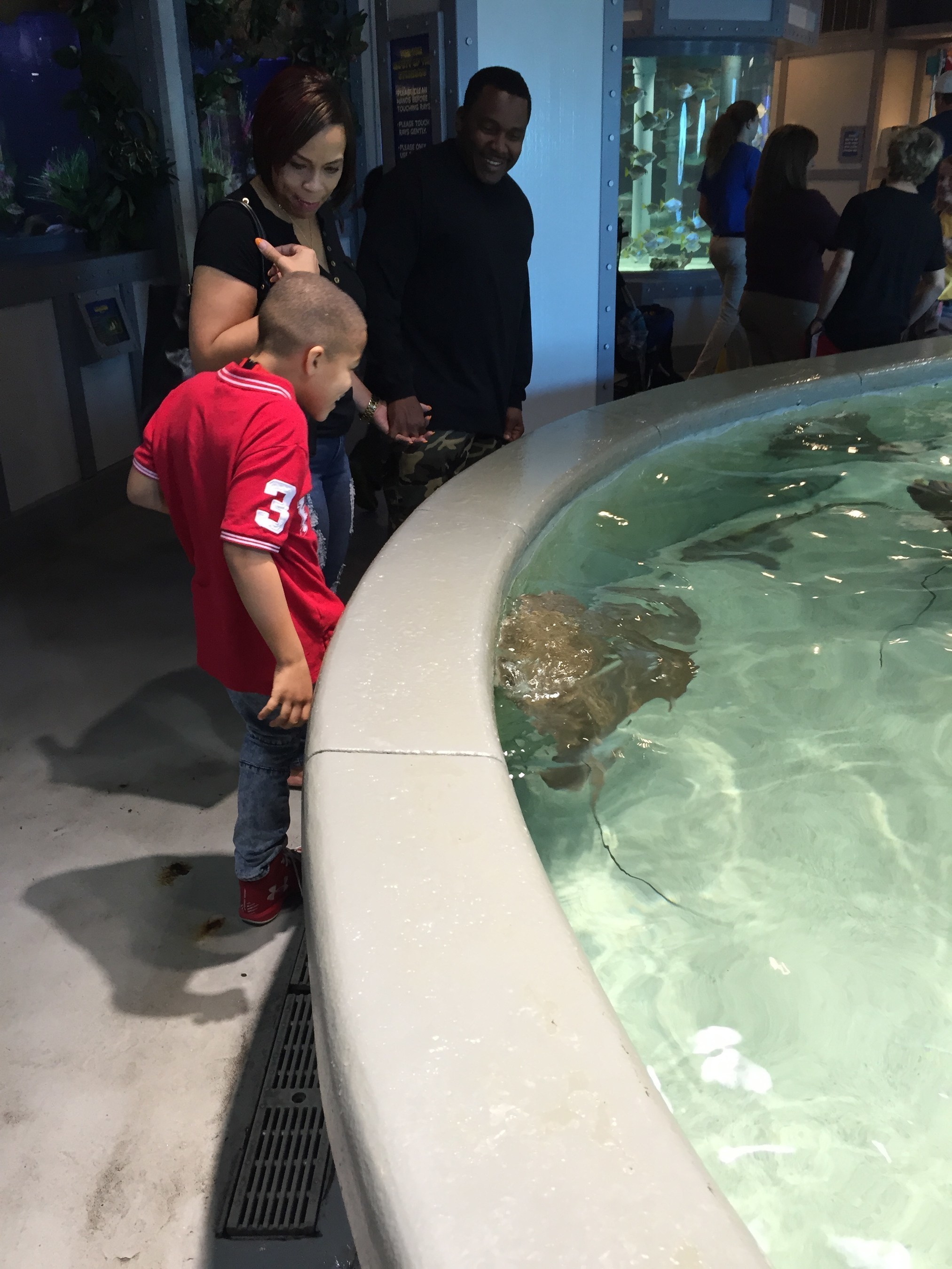 A Wounded Warrior Project family examines a stingray at the Kemah Aquarium, during an Alumni Program event.