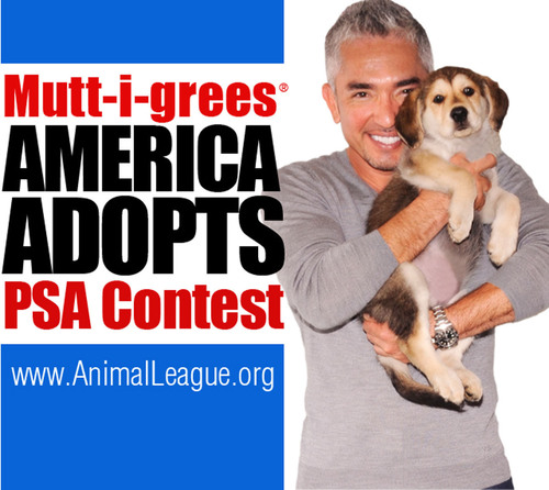 World-renowned dog expert, Cesar Millan invites schools nationwide to raise awareness about shelter pets, with the Mutt-igrees(R) America Adopts PSA Contest. The Winning School receives a $10,000 Grant, a visit by Cesar Millan, a trip for four to New York City and National Geographic WILD will premiere the winning PSA. Your school can get creative and help make a difference in the lives of homeless animals. Visit: http://www.animalleague.org/my-league/offers-promotions/promos/mutt-i-grees-america-adopts-psa-contest.html.  (PRNewsFoto/North ...
