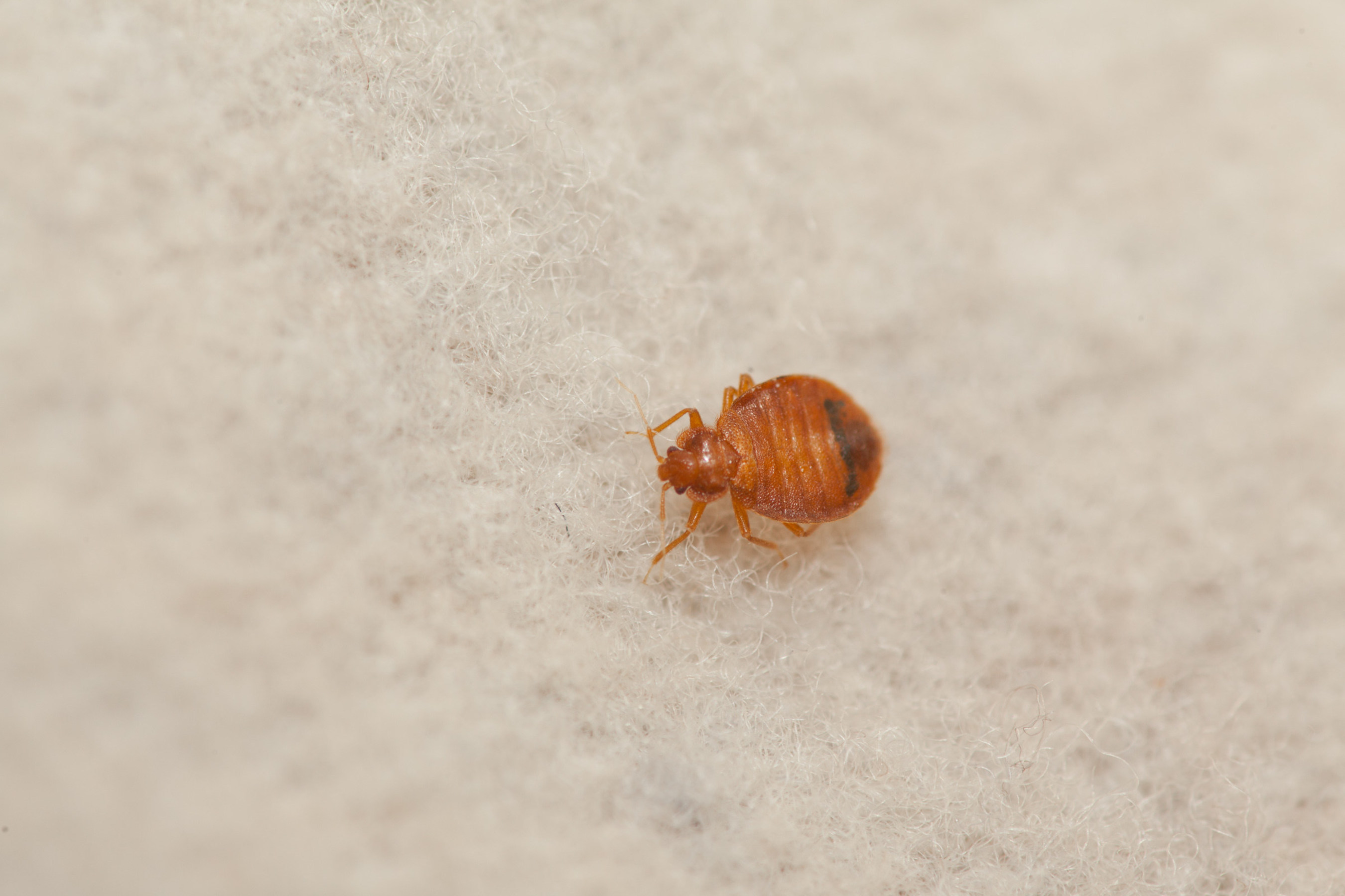 Chicago tops Orkin's bed bug cities list for the 3rd year in a row. Orkin experts say bed bugs are a serious issue across the country. Rollins, Orkin's parent company, reports an 18% increase in bed bug revenue in 2014.