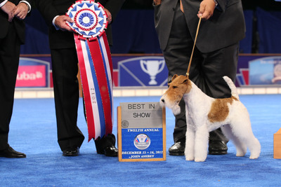 Wire Fox Terrier 'Sky' Wins Best in Show at the AKC/Eukanuba National Championship.  (PRNewsFoto/American Kennel Club, Croft-Elliott copyright AKC)