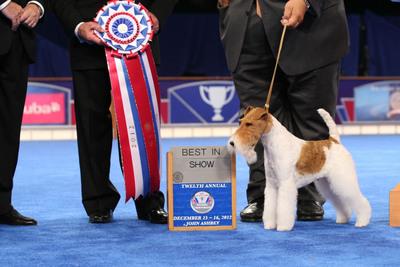 Wire Fox Terrier 'Sky' Wins Best in Show at the AKC/Eukanuba National Championship.  (PRNewsFoto/American Kennel Club, Croft-Elliott copyright AKC)
