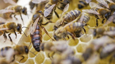 Since 2013, U.S. beekeepers have been doing better at reducing winter honey bee colony losses.