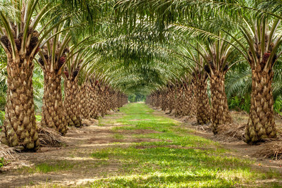 Somaclonal variation among otherwise identical oil palm clones raises sustainability concerns.