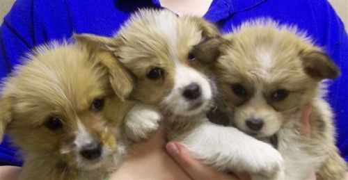 160 Adorable Puppies, Including Small Purebreeds, Rescued by North Shore Animal League America,