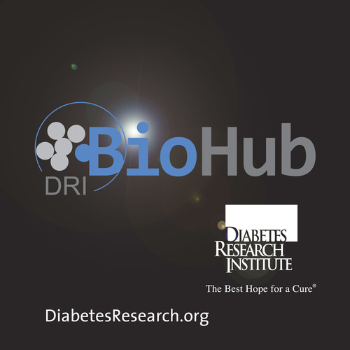 "Scientists at the Diabetes Research Institute in Miami are developing a DRI BioHub, a bioengineered ""mini organ"" that mimics the native pancreas by containing insulin-producing islet cells that sense blood sugar levels and release the precise insulin needed in real time.  (PRNewsFoto/Diabetes Research Institute Foundation)"