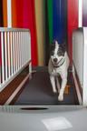 Dogs stay fit at Pooch Hotel.  (PRNewsFoto/Pooch Hotel)