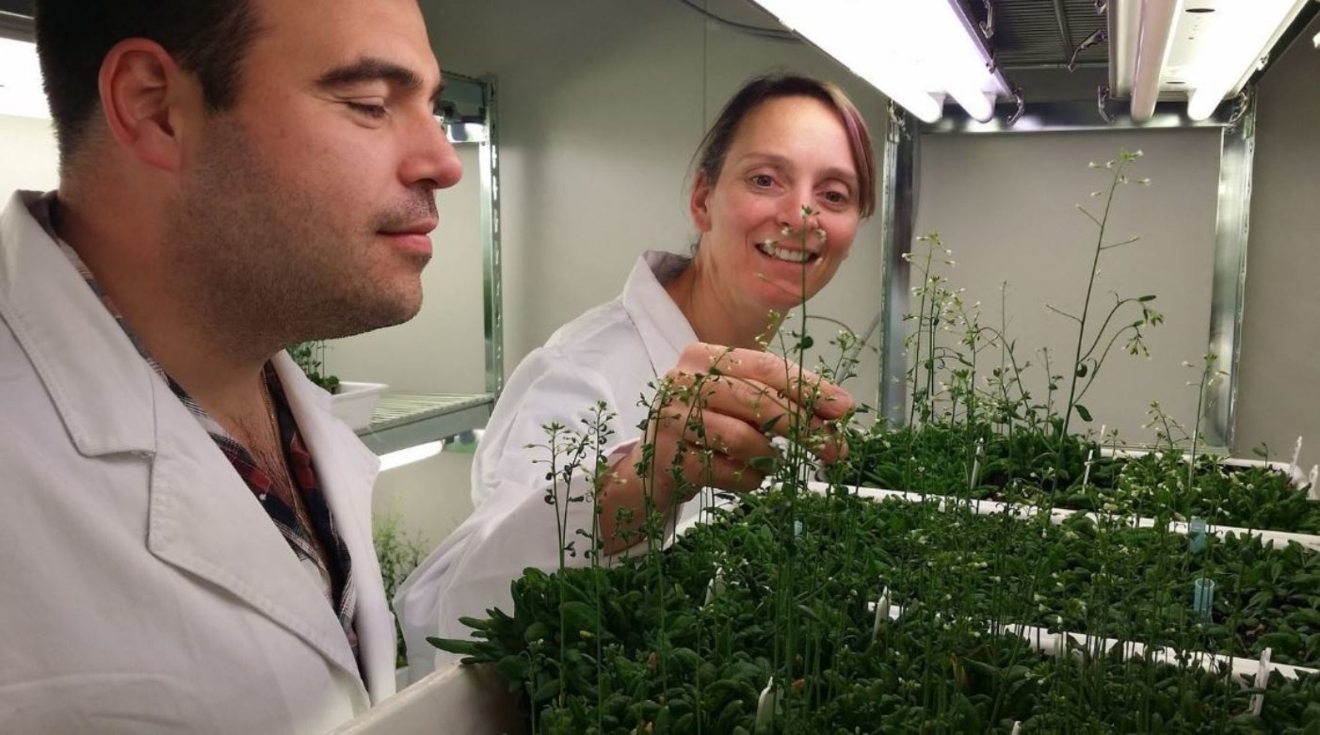 Supercomputing research by IBM and Australian universities reveals the molecular structure of plants