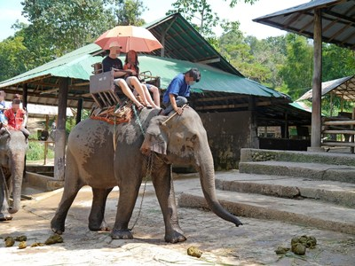 An Asian elephant used to take tourists for rides. World Animal Protection believes that wild animals belong in the wild and should not be used for entertainment.