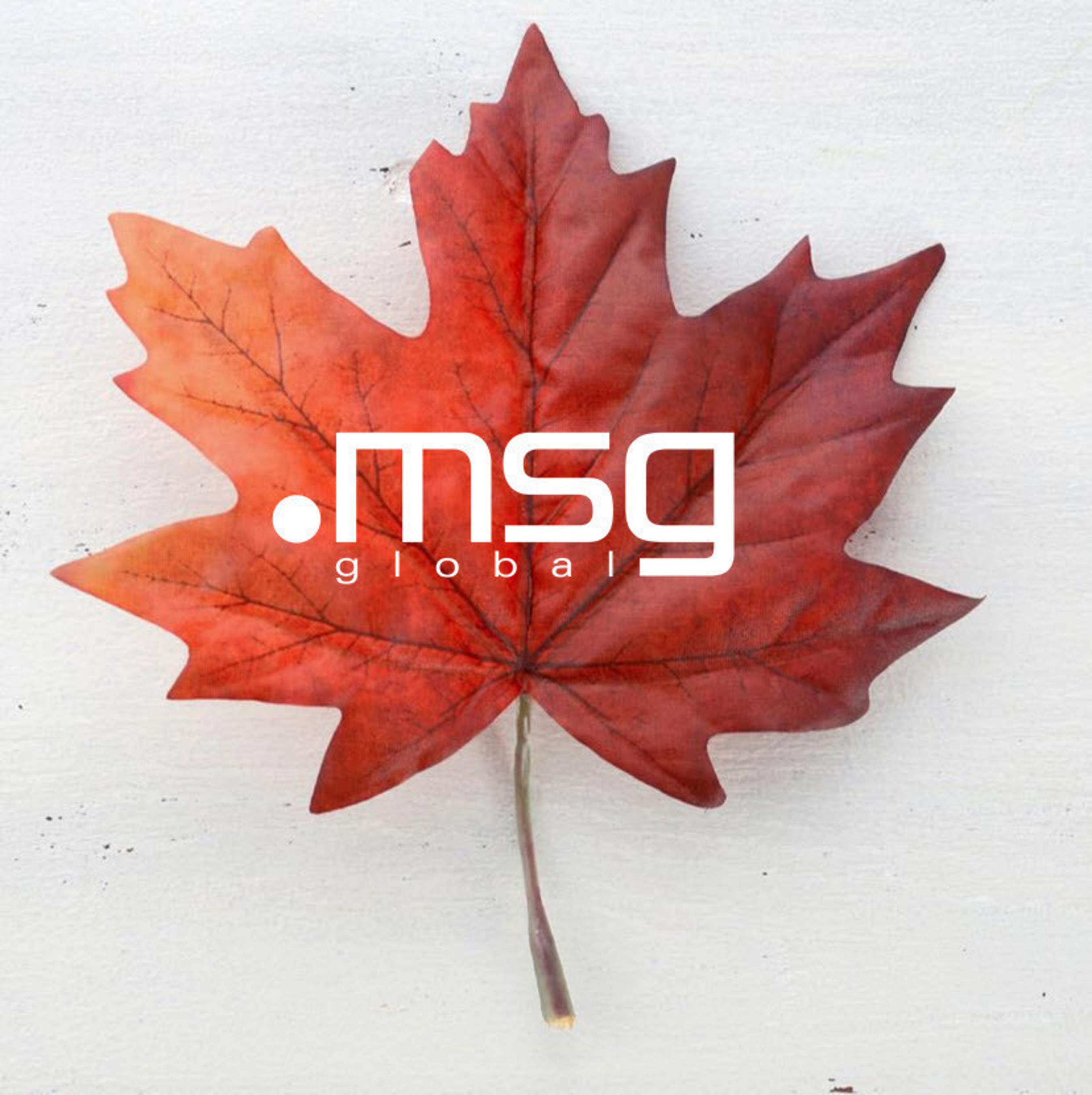 Announcing msg's Toronto office and Innovation Lab.