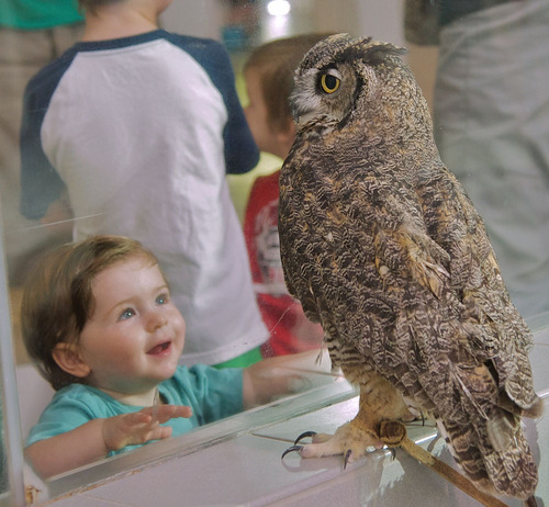 Youngsters meet local wildlife nearly nose to beak at the Lindsay Wildlife Museum Free Admission Day on Feb. 2.  (PRNewsFoto/Lindsay Wildlife Museum)
