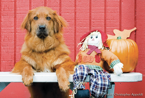 With Halloween in less than a week, the Animal League has some tips to help keep pets safe.  Visit AnimalLeague.org for information.  (PRNewsFoto/North Shore Animal League America)