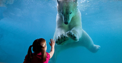 IBM Big Data analytics is changing the game for Point Defiance Zoo & Aquarium to engage today's Millennial consumer to deliver a more enriched visitor experience.