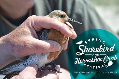 Wetlands Institute Celebrates 4th Annual Spring Shorebird and Horseshoe Crab Festival
