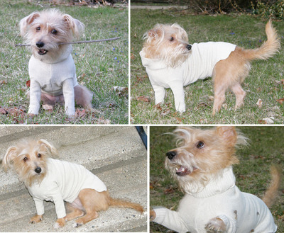 Third place Etsy prize winner, 20-Minute Dog Sweater by Jennifer Kerr