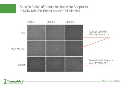 Cancer HTS research indicates that specific ratios of Cannabinoids led to Apoptosis in MDA-MB-231 Breast Cancer cell viability