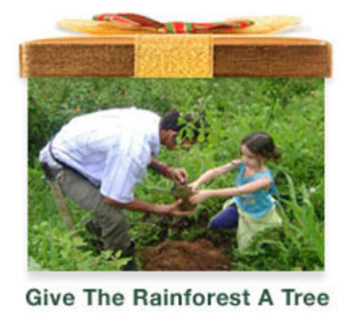 Give The Rainforest A Tree. (PRNewsFoto/iGiveTrees) (PRNewsFoto/IGIVETREES)