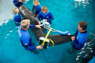 SeaWorld Orlando's Animal Rescue Team Uses Special Orthopedic Equipment to Care for Once-stranded Pilot Whale