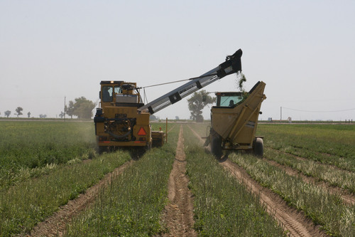 S&W Seed Company Announces Start of First Stevia Harvest