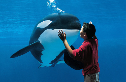 SeaWorld Entertainment, Inc. Announces Closing Of Initial Public Offering Of 29,900,000 Shares Of