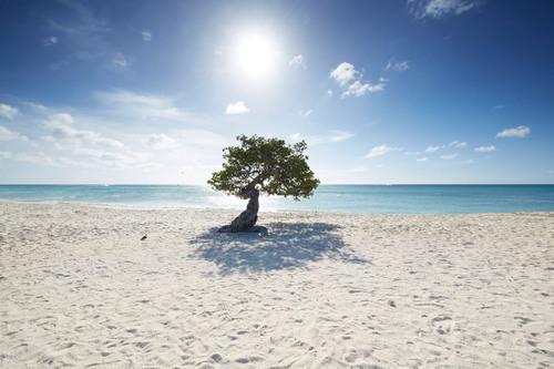 Visit Aruba's One happy island in Times Square this Valentine's Day aruba.com.  (PRNewsFoto/Aruba ...