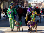 Thousands of Dogs and Owners Paraded Through St. Louis at the 20th Annual Beggin'® Pet Parade