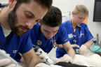 Maddie's Fund(R) is pleased to announce its grant of $11,220,221 to University of Florida's College of Veterinary Medicine in support of its shelter medicine education program.